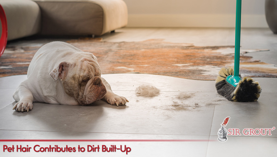 Pet Hair Contributes to Dirt Built-Up